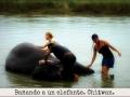 Bañando a un elefante