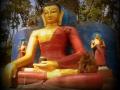 Buda y monos