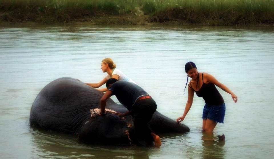 Baño elefante Cómo hago para viajar tanto