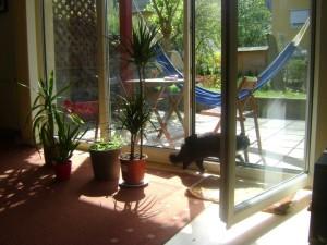 El gato,la terraza y la hamaca.