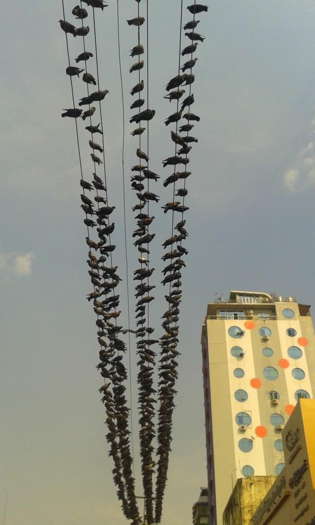 La razón por la que hay algunos cortes eléctricos: no es de sorprenderse que, con semejante cantidad de palomas, la luz en Yangon se vaya de vez en cuando.