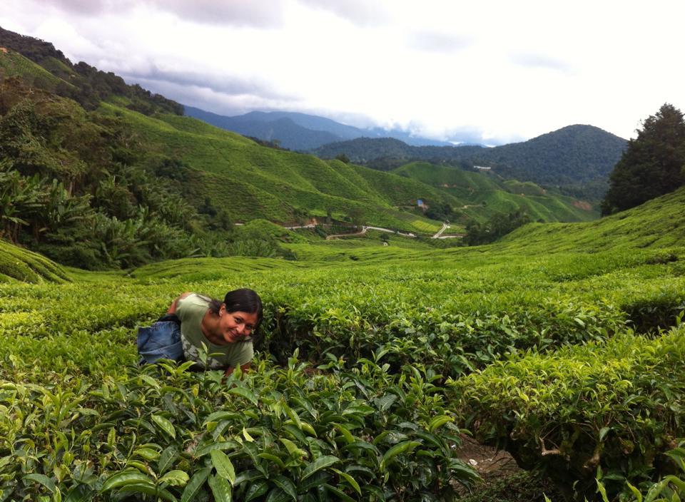 Yo, entre las plantaciones de té de Cameron Highlands, Malasia. ¿Ven por qué tenía tanta prisa por llegar?