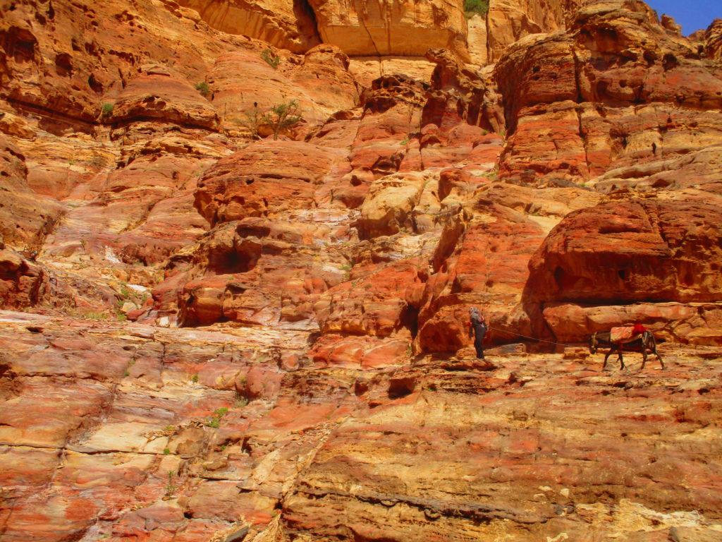 Burro y beduino Petra